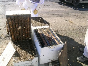 Our beekeepers have wonderful bees