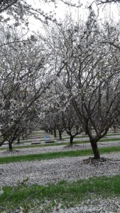 Beautiful Orchard