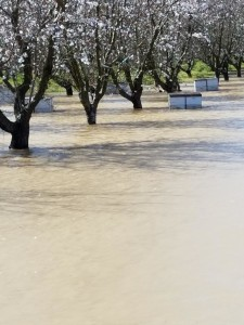 Many beekeepers suffered losses from the 2017 flooding